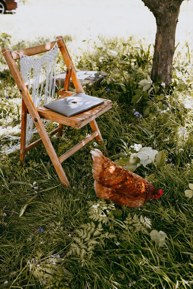 , Calligraphy, camera & chickens!, The Menagerie Lifestyle Photography